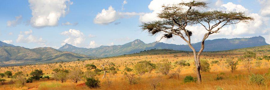 LEYHAUSEN AFRICA 2
