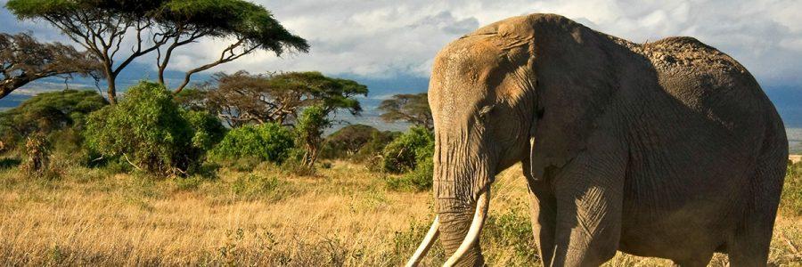LEYHAUSEN AFRICA 3